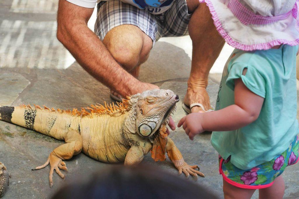 Aquaworld Aquarium & Reptile Rescue Centre Herklion Hersonissos Crete - allincrete.com