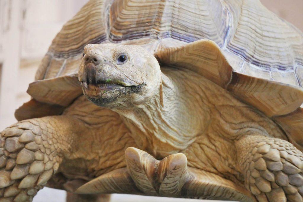 Aquaworld Aquarium & Reptile Rescue Centre Herklion Hersonissos Crete
