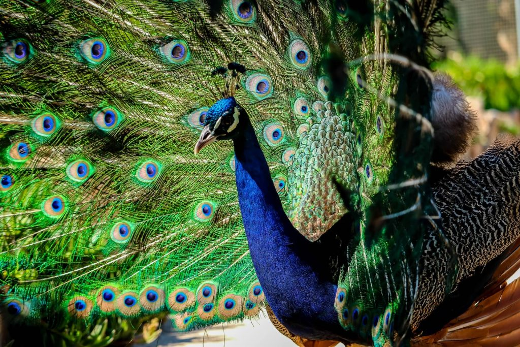 Amazonas Animal Park - allincrete.com